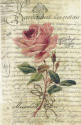 Aged Papers- French Script Rose Vertical